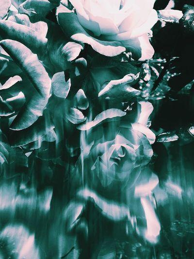 Acid trips Organsinsleep Roses Flora Acid Acid Trip Cyan Laurenluck Prism Colors Supernatural Botanical Odd