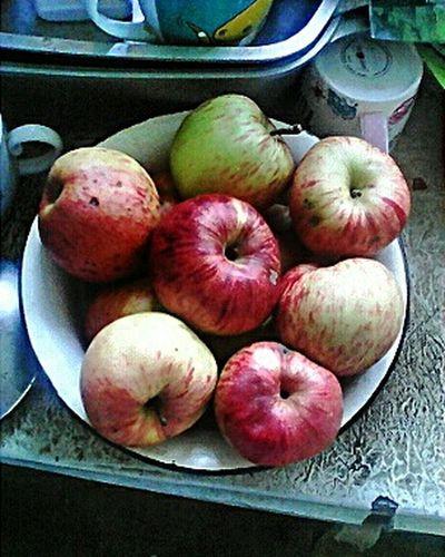 яблоки Урожай2015 Урожайность🌅 урожай осеннийурожай яблочки Taking Photos EyeEm Gallery Eye4photography  Apples