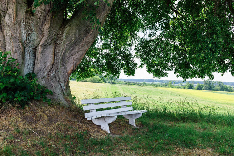 empty bench on field by trees in park Absence Baum Beauty In Nature Bench Day Empty Field Grass Green Color Growth Juni Land Nature No People Outdoors Park Park Bench Plant Seat Tranquil Scene Tranquility Tree Tree Trunk Trunk