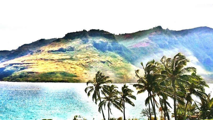 Ocean Harbor Mountains Coconut Trees Summer OpenEdit Hawaii Seascape