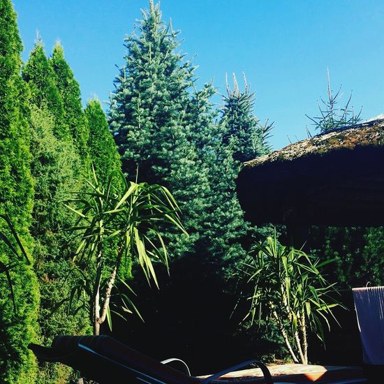 Growth Plant Nature Green Color Tree Day No People Beauty In Nature Outdoors Sky Clear Sky Vacations Tree Beauty In Nature Grass Breathing Space