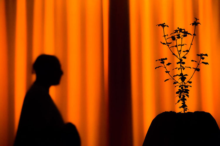 Silhouette Plant And Person Against Orange Curtain