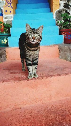 Cat in a hostal in San Pedro La Laguna