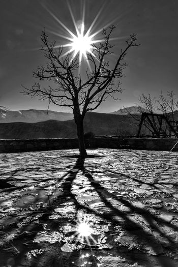 Sun Sunlight Nature Landscape Outdoors Sky Scenics Beauty In Nature Tree No People Day Shadow 10