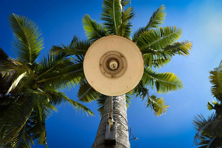 Lamp Blue Sky Coconut Palm Tree Palm Tree Up