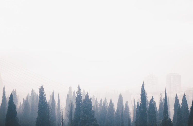 Lucid Beauty In Nature Cloud - Sky Cold Temperature Day Fog Growth Landscape Nature No People Outdoors Scenics Sky Tranquility Tree Treetop Window View Winter