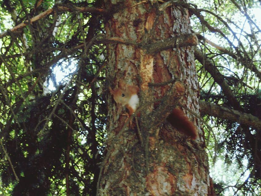 Squirrel Tree Nature Hello World