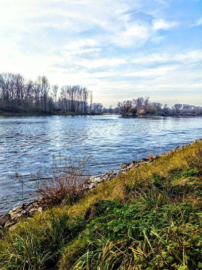 Isar River Tree