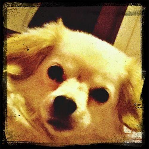 My baby puppy ??