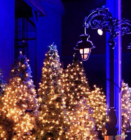 Christmas on the Boulevard My Winter Favorites Twelve Days Of Christmas On Eye Em Christmas Time Williamsburg Christmas Lights Christmas Decorations Christmas Fun