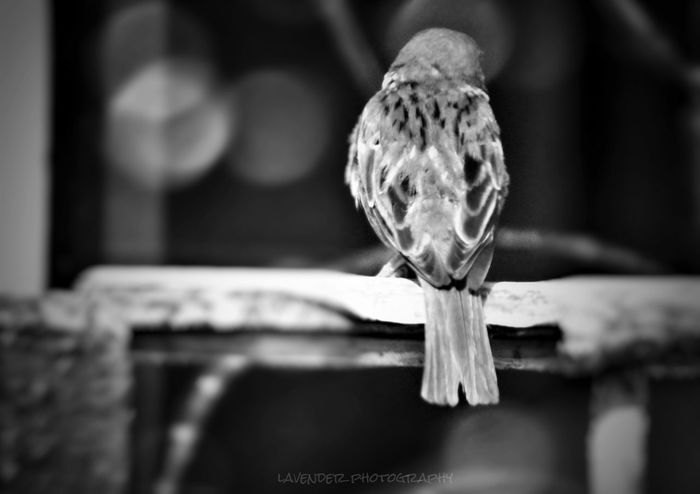 Bnw_collection Bnw Bnw_captures One Animal No People Bird Day Bnwlovers Bnw Photography Bnw_society Bnw_life Photographylovers Eyeemphotography EyeEm Capture Eyeemphotography Birdphotgraphy Captured Moment Outdoor Monochrome Monochromatic Monochrome Photography Nocolour