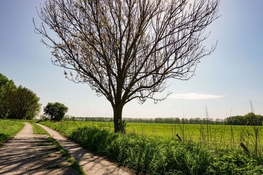 The Way Forward Plant Tree Sky Growth Landscape Field Beauty In Nature Environment Nature Tranquility Rural Scene Tranquil Scene Agriculture Land Scenics - Nature Green Color No People Grass Day Road