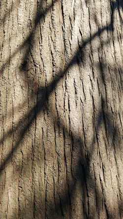 Backgrounds Close-up Cracked Day Full Frame Nature No People Outdoors Play Of Light Shadow On Woo Shadows Shadows & Lights Sunlight Textured  Time Tree Ring Wood - Material