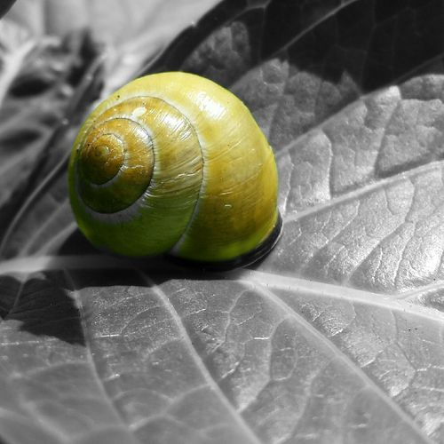..Sleeping Beauty.. Snail Snailshell Snail Collection EyeEm Nature Lover Photoart Art Sleeping Beauty Natureshooters Natureshot  Nature