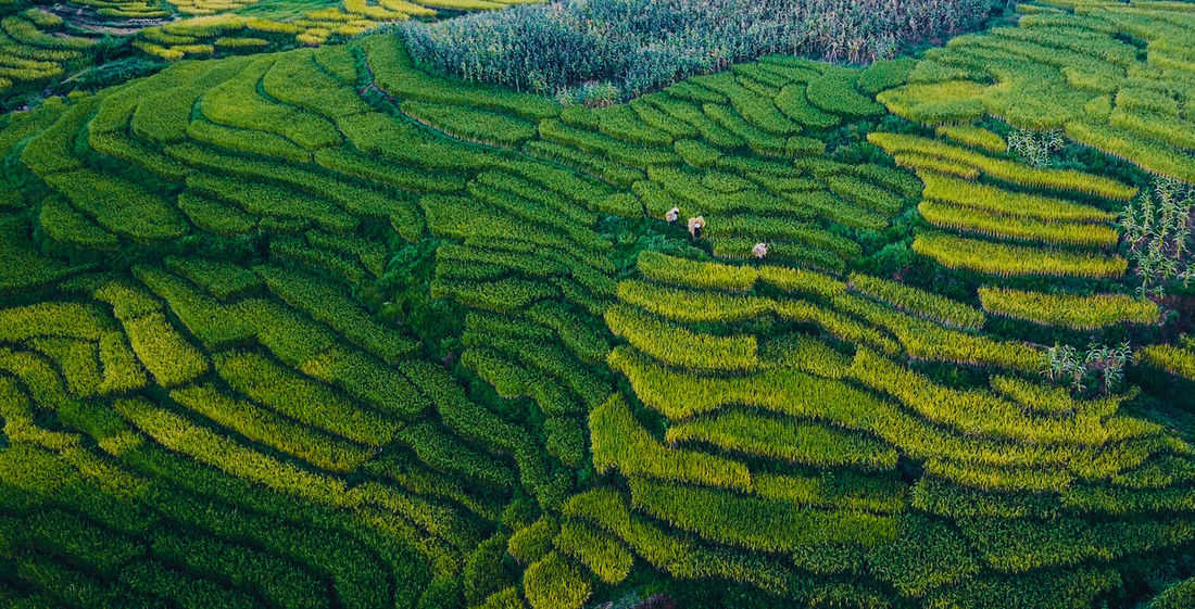 Been There. Hà Giang Rice Paddy Agriculture Beauty In Nature Day Farm Field Food Growth Landscape Mountain Nature No People Outdoors Plant Rice Paddy Scenics Social Issues Tea Crop Terraced Field Vietnamphotography