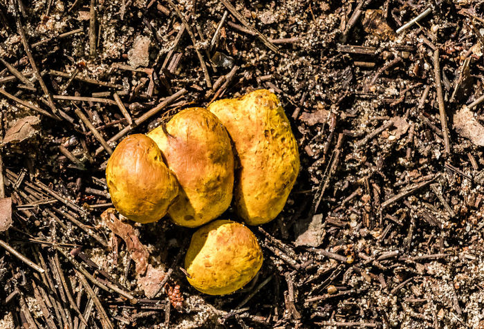 Fungus growing on forest floor in Pinar del Rey, San Roque, Spain Close-up Nature Plant Dirt High Angle View Directly Above Fungus Fungus On Ground Orange Color Yellow Color Forest Floor Forest Floor Growth Mushroom Mushrooms Mushroom_pictures Mushroomphotography Growth Growth In Nature