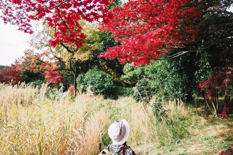 Tourist Visiting At Japanese Garden