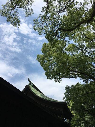 Hakozki Shrine 筥崎宮