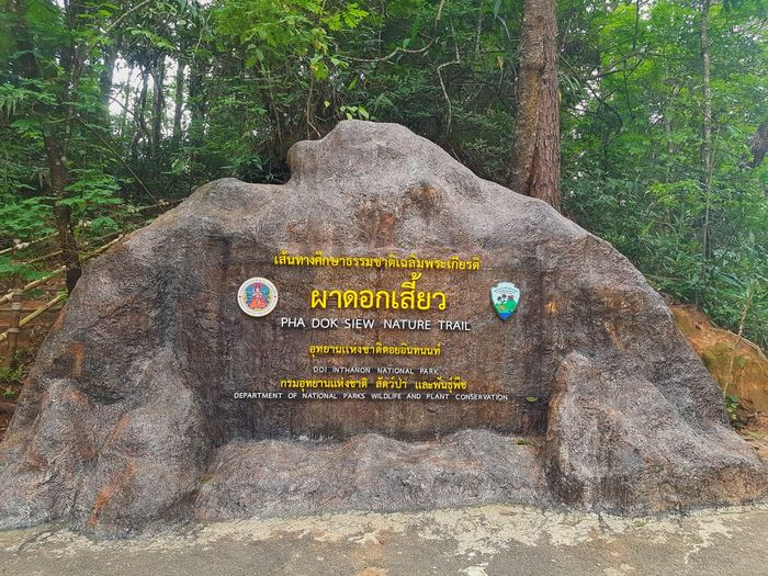 Text on rock in forest