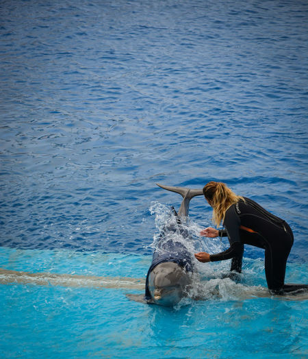 Female trainer with dolphin in swimming pool at zoo