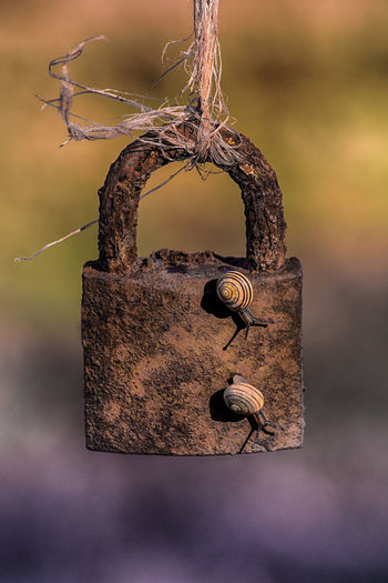 Sunshine Colourful Creative Photography CreativePhotographer Creativity Macro Photography Nature Ribbon Snail Animal Themes Animals Close-up Creative Focus On Foreground Lock Macro Nature_collection Raffia Rusty Rusty Metal Snails Padlock Love Lock