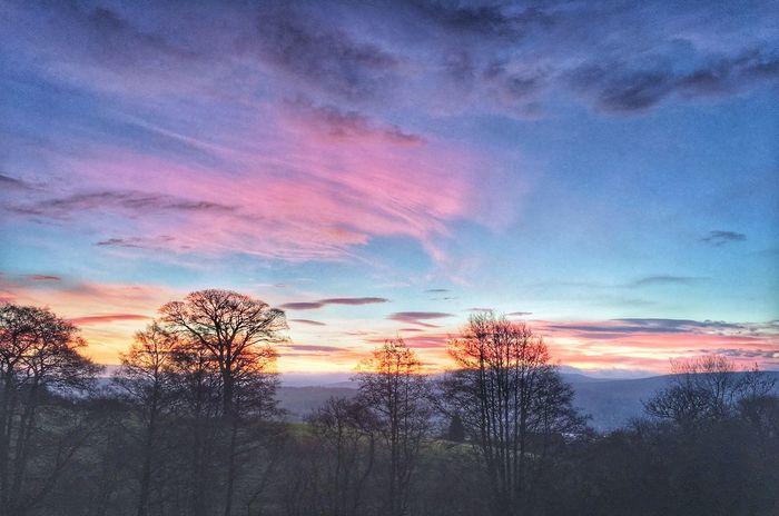 Wales Sky Tree Scenics No People