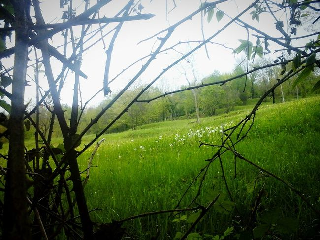 Beyond the dark. Nature Field Beauty In Nature Grass No People Day Tree Sky Plant Photography Veneto Italy Nature_collection My Home Mountains Green Feeling The Traveler - 2018 EyeEm Awards