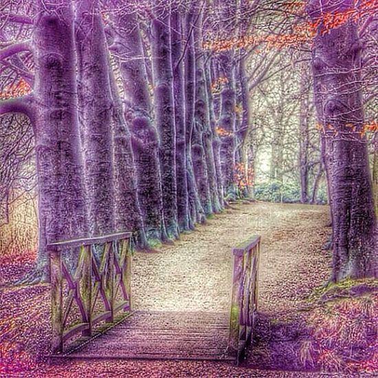 Barneveld Schaffelaarsebos Leaves Trees fall