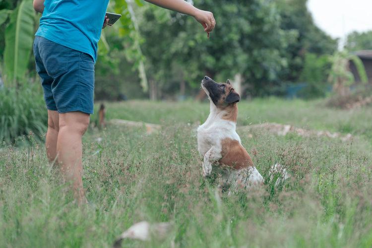 Full length of dog on field