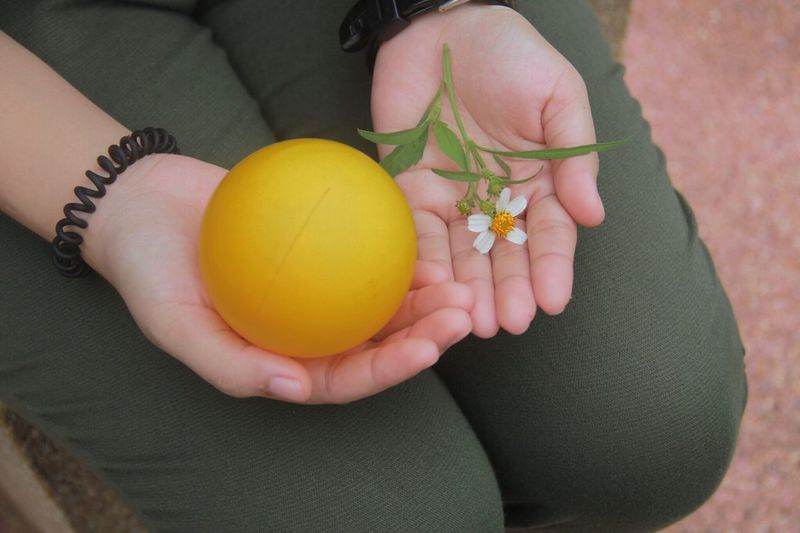 High angle view of woman holding fruit