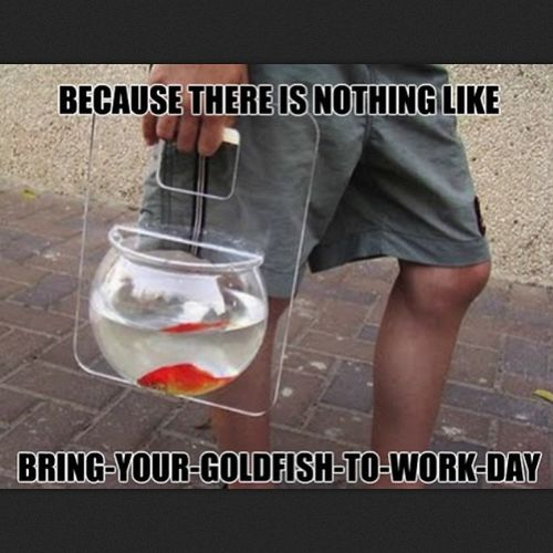 I knew I'm not alone. I need this holder, I can bring Harry to workWorkwithgoldenfish