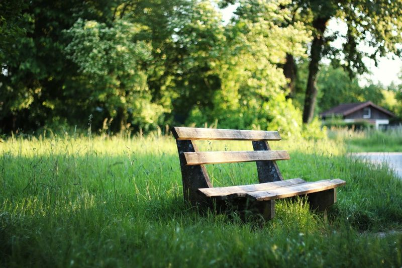 Wooden bench on grassy field