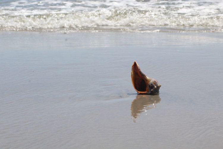 reflection Conch Waves Ocean Atlantic Ocean Sand Beach EyeEm Selects Water Swimming Sea Beach Wave Sandy Beach Shore