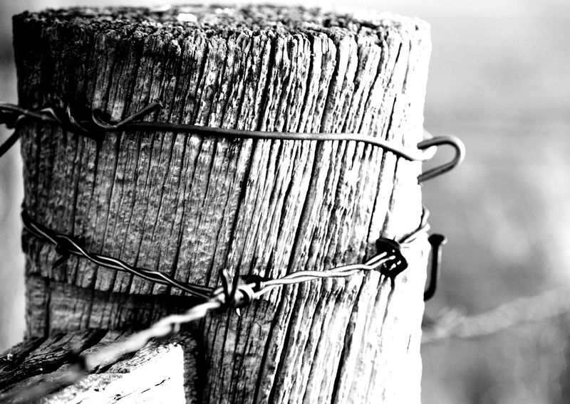 Gate post Eye Level View Staple Weathered Outdoors South Of Manville Wyoming Black And White Wood Post Close-up Barbed Wire Fence Twisted