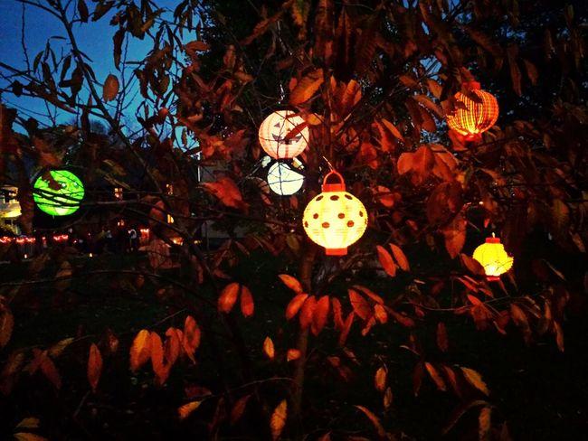 Halloween_Collection Paperlanterns TreePorn Taking Photos