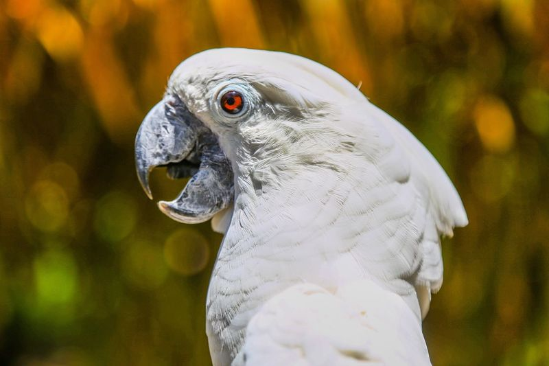 Pet Portraits Cacatua Bird Pajaro White Bird Of Paradise