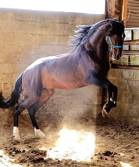 Horse Cheveaux Photographer