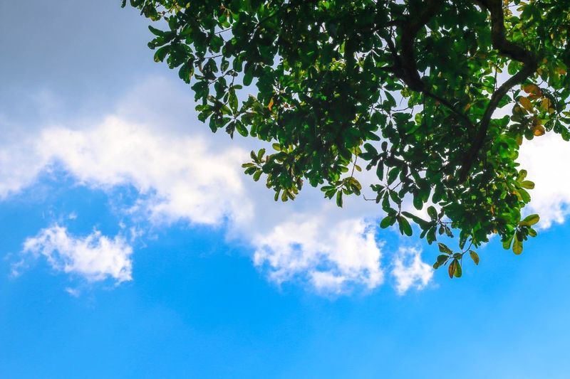 Sometime smile when look a sky Nature_collection Sky And Clouds Tree Holiday Chingmai Monjam