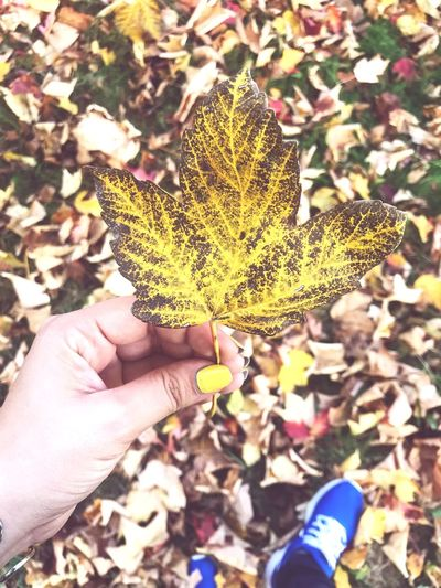 Autumn 🍂 Autumn Human Hand Hand Human Body Part One Person Real People Personal Perspective Holding Plant Nature Leaf Day Autumn Focus On Foreground Change