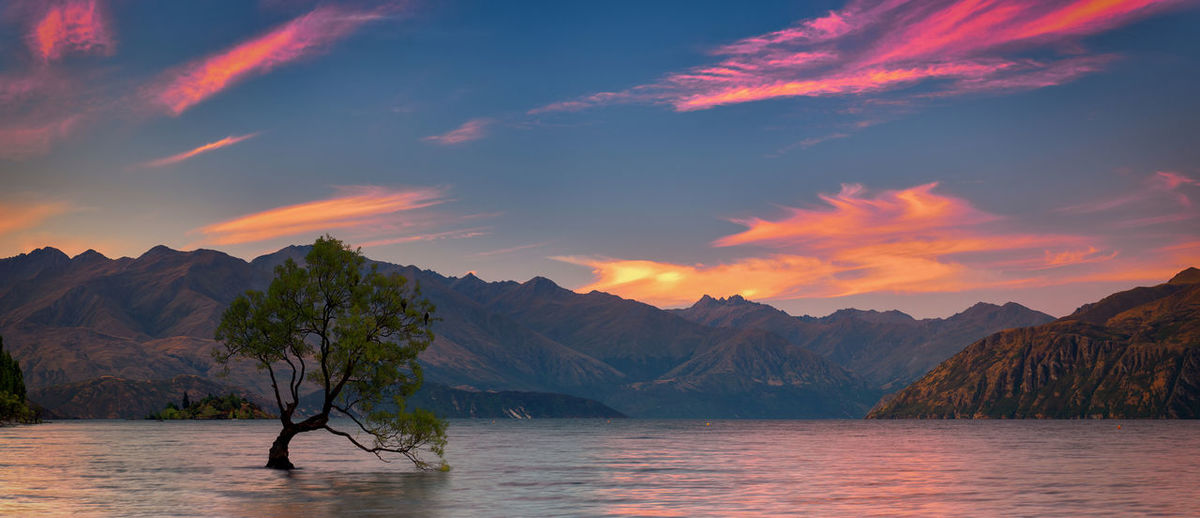ThatWanakaTree Otago, South Island of New Zealand Tree Wanaka Beauty In Nature Cloud - Sky Clouds Idyllic Lake Mountain Mountain Range Nature New Zealand No People Non-urban Scene Orange Color Otago Outdoors Scenics - Nature Sky Sunset Tranquil Scene Tranquility Tree Wanaka Tree Water Waterfront