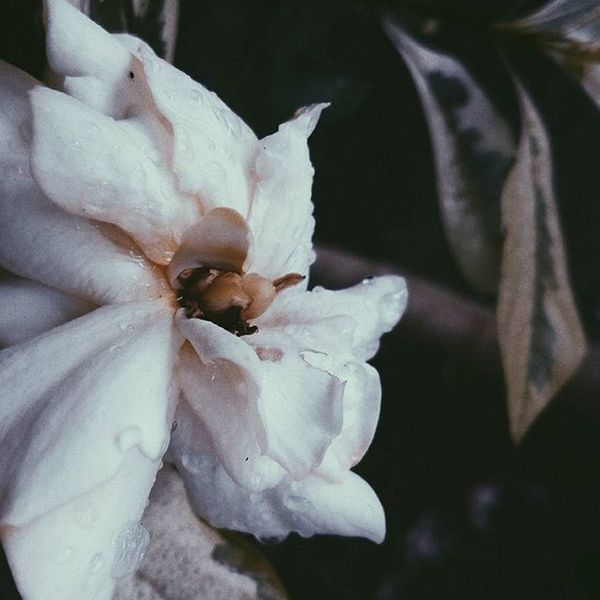 Another chance to grow. 🌺🌺🌺🌺 365of365 Tomorrowisanotherday VSCO Vscocam VSCOPH Itsgoingdown
