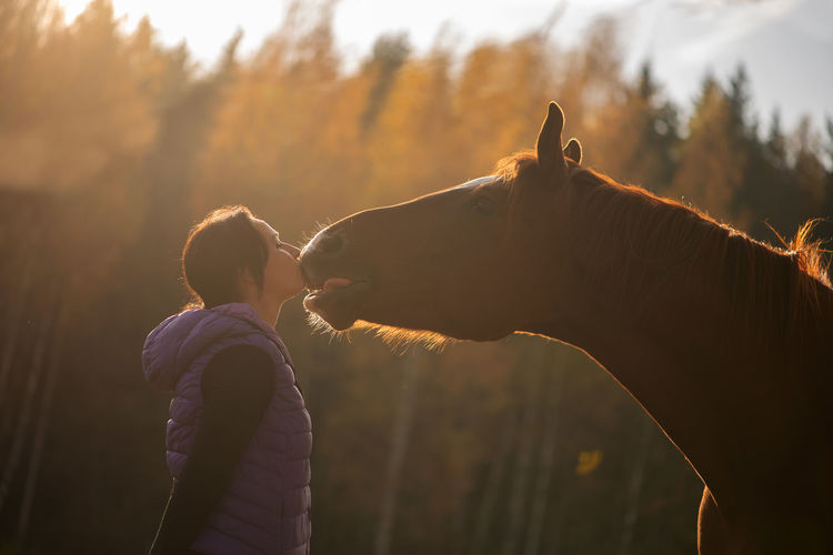 Side View Of Mid Adult Woman Kissing Horse While Standing Against Trees During Sunset