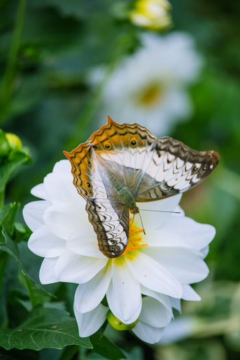 Butterfly on a