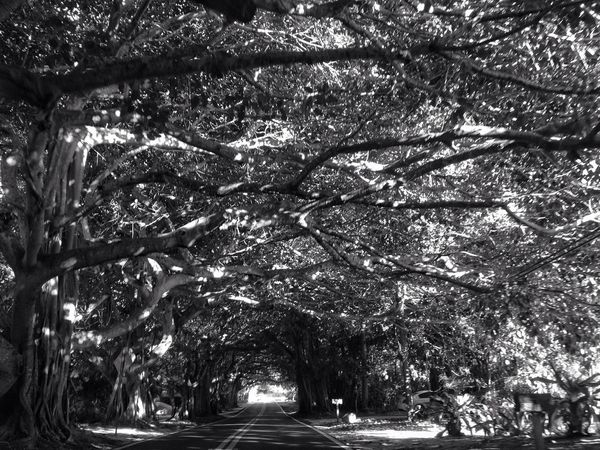 EE_Daily: Black And White Sunday AMPt - Vanishing Point Landscape_Collection EyeEm Best Shots - Trees