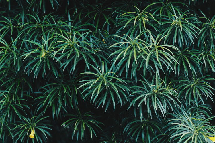 WILD Foliage Aesthetic Outdoors Nature Wild Tree Beauty Agriculture Botanical Garden Plant Green Color Lush Foliage Leaves Greenery Green EyeEmNewHere