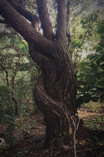 연리지 Nature's Diversities Tree Beauty In Nature