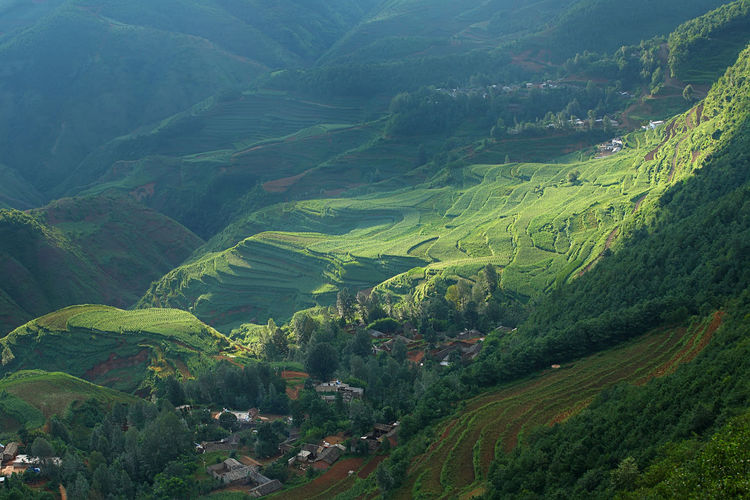 Beautiful landscape of village on mountain range with beam light in morning at Hongtudi in Dongchuan, Yunnan, Kunming of China Scenics - Nature Environment Landscape Beauty In Nature Land Green Color Agriculture Tranquility Tranquil Scene Plant Growth Mountain Rural Scene Field High Angle View No People Tree Nature Idyllic Lush Foliage Outdoors Rolling Landscape China Village