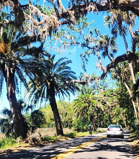 Florida roads First Eyeem Photo