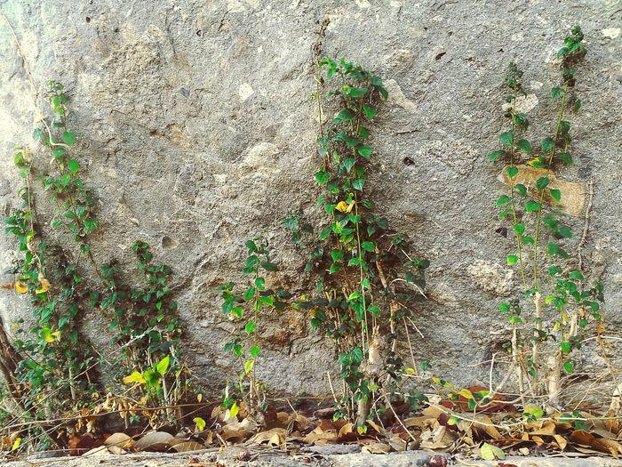 Plant&rock Vietnam Somewhere