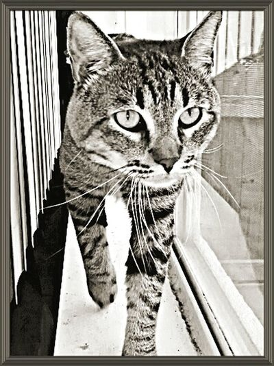 Mobile Photography Taking Photos Good Morning Black And White Cats Pet Photography  Cute Cats Animal Photography Cute Pets Hows Your Morning??